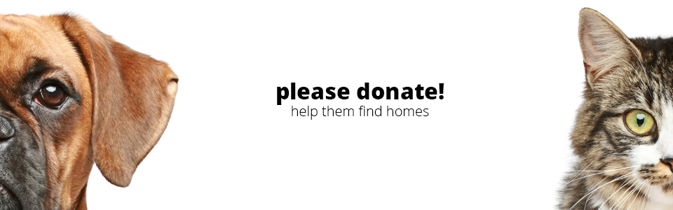 help-shelter-new